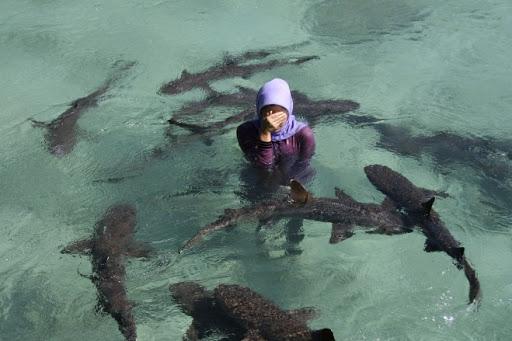 hiu-menjangan-kecil